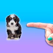 别碰我的狗